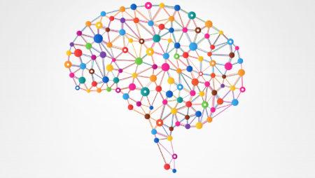 Tópicos revelantes em Neuropedagogia (Parte 02)