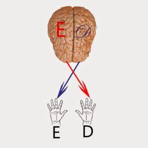 Tópicos revelantes em Neuropedagogia (Parte 02) 3